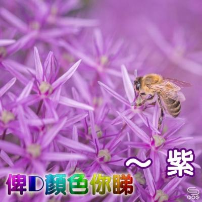 俾D顏色你睇(07)- 紫