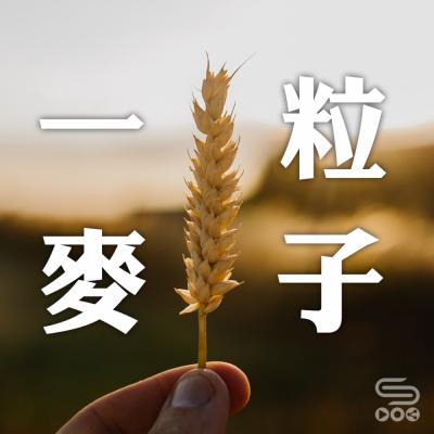 一粒麥子,