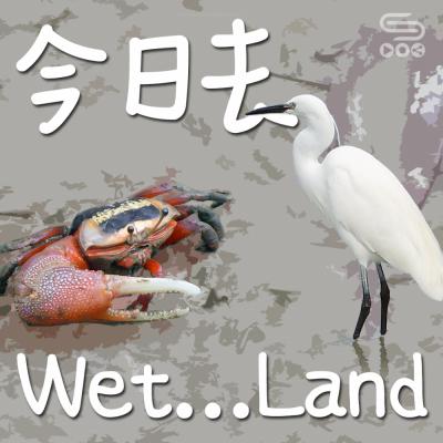 今日去wet...land