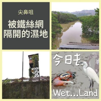 今日去wet...land(11)- 尖鼻咀 - 被鐵絲網隔開的濕地