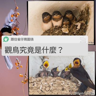 跟住雀仔周圍鴴(01)- 觀鳥究竟是什麼?
