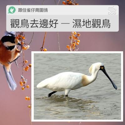 跟住雀仔周圍鴴(06)- 觀鳥去邊好 — 濕地觀鳥