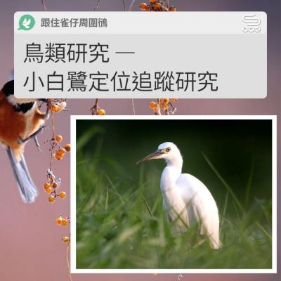 跟住雀仔周圍鴴(09)- 鳥類研究 — 小白鷺定位追蹤研究