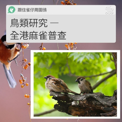 跟住雀仔周圍鴴(10)- 鳥類研究 — 全港麻雀普查