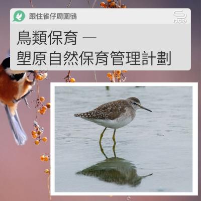 跟住雀仔周圍鴴(11)- 鳥類保育 — 塱原自然保育管理計劃
