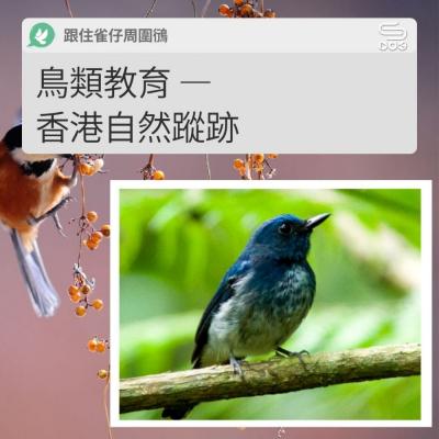 跟住雀仔周圍鴴(13)- 鳥類教育 — 香港自然蹤跡